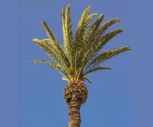 Cuidado de palmeras en espacios públicos en Vera