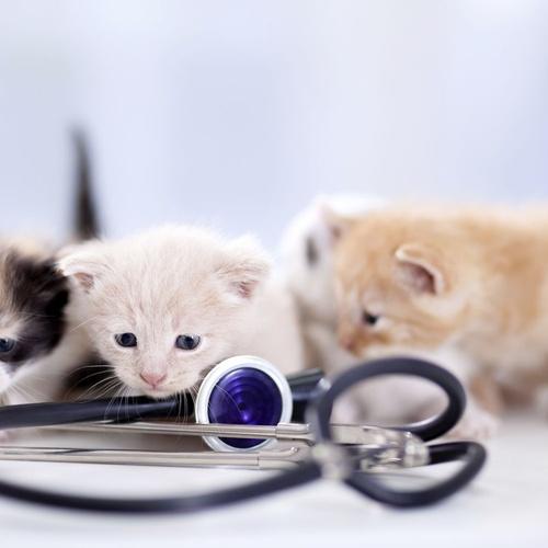 Medicina veterinaria preventiva en Villanueva del Pardillo