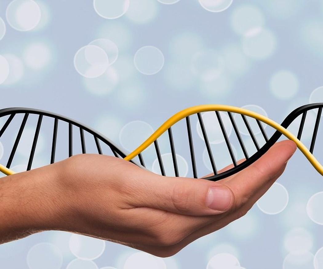 La genética en la nutrición