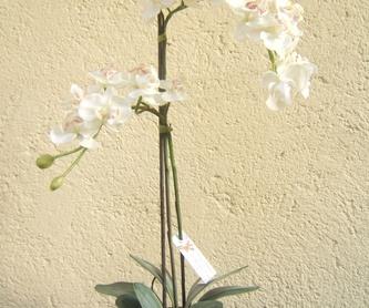 Dulce amanecer: Catálogo de flores y plantas de Floristería Pétalos
