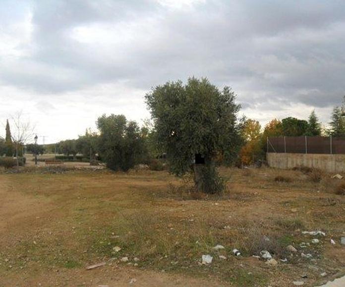Terrenos: Productos de Simar Inmobiliaria