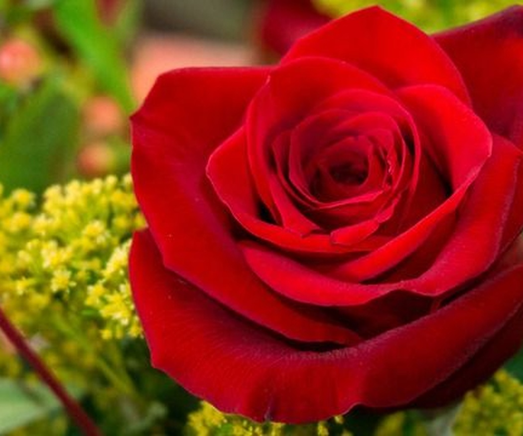 En San Valentín, díselo con flores