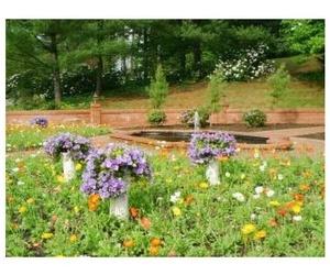 Tratamientos fitosanitarios: Jardinería Suso