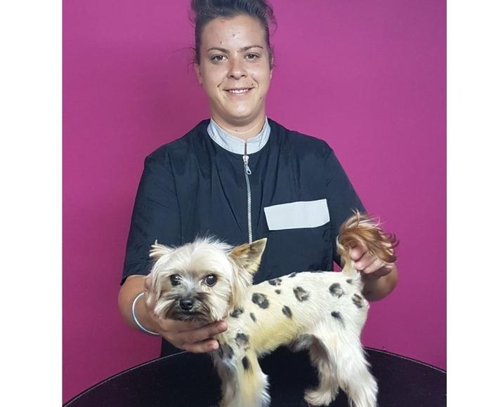 Peluquería de mascotas: Productos y servicios de Agrícola Son Espanyolet