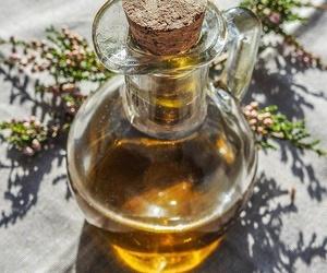 Alternativas al aceite de oliva en la cocina