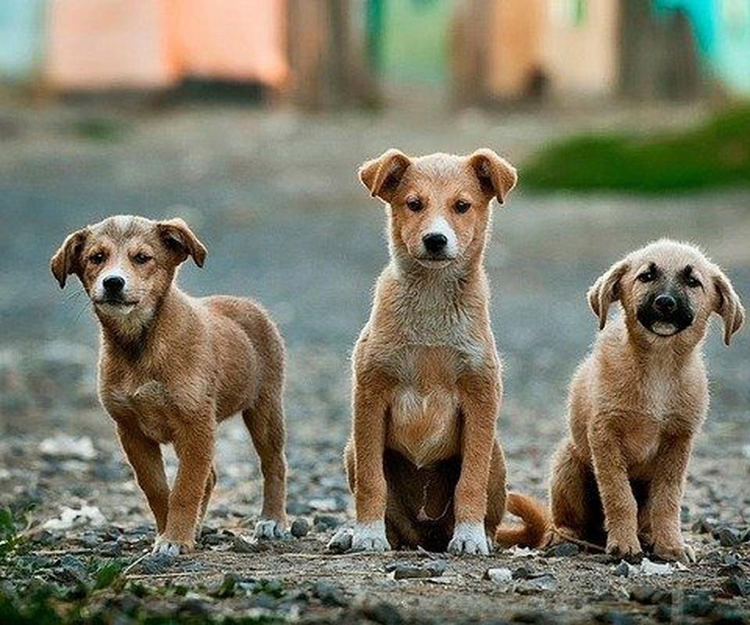 La relevancia de la nutrición de un cachorro