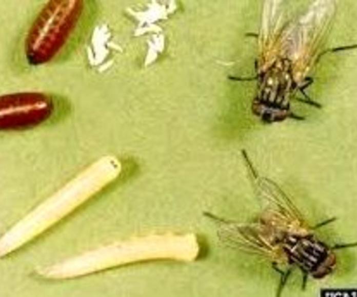 Insectos voladores 1