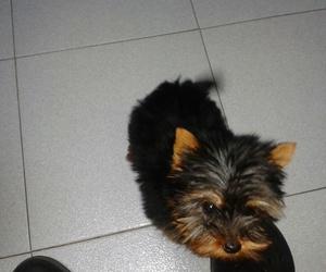 Servicio de peluquería canina en San Lucas