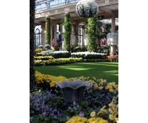 Todos los productos y servicios de Jardines (diseño y mantenimiento): Jardinería Suso