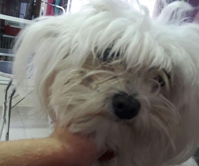 Peluqueria canina en Murcia
