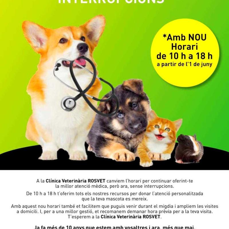 Nuevo horario a partir de Junio: Servicios especializados de Clínica Veterinaria Rosvet