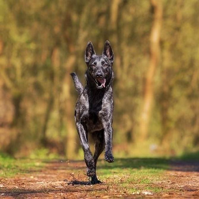 Cuidados para tu perro en otoño