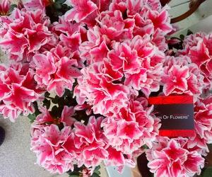 Plantas con flor
