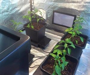 Sistemas  de iluminación para cultivo