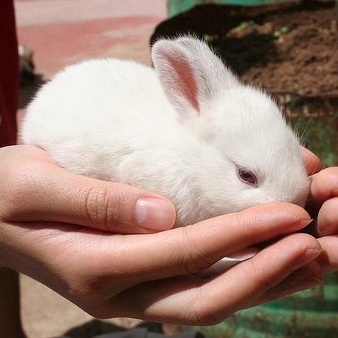 La higiene del conejo