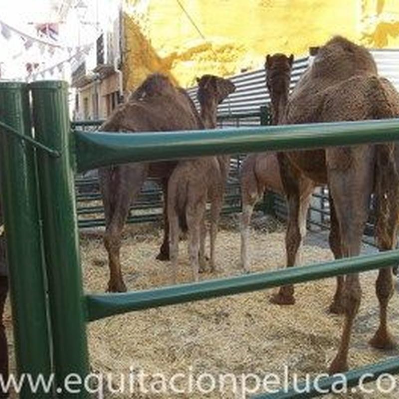 Mercados: Servicios de Equitación Peluca