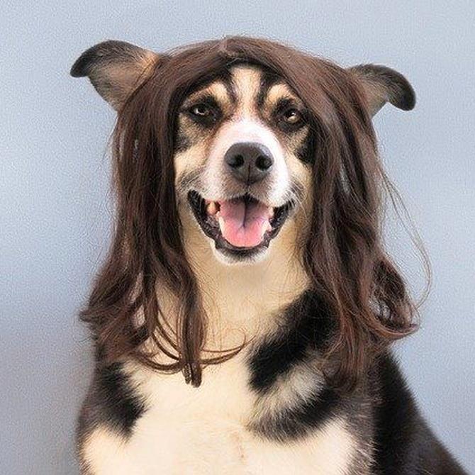 Cinco motivos por los que no deberías cortarle tú mismo el pelo a tu mascota