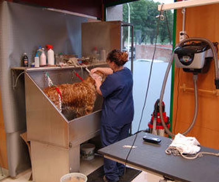 Peluquería canina: Productos y servicios  de C.Vet.Mon Animal Berga