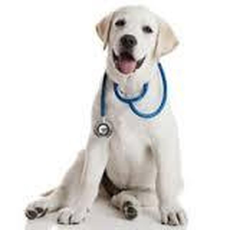 Servicio de urgencias: Especialidades de Clínica Veterinaria Albeitar