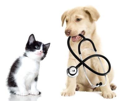 Signos de dolor en mascotas