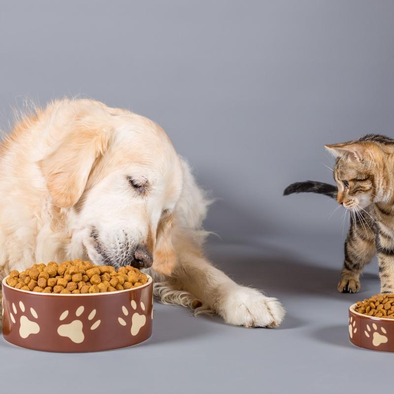 Alimentación: Servicios de Mascotas Dreams