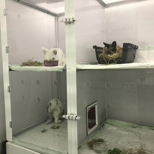 Residencia para animales exóticos Tenerife Sur