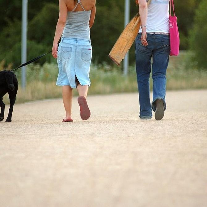 La importancia del paseo para tu perro