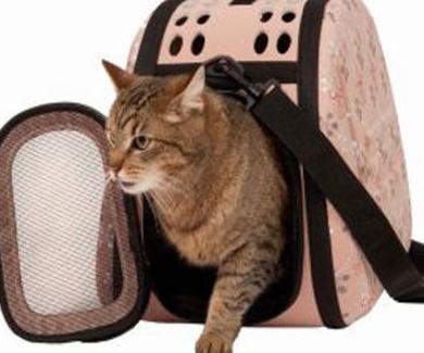 Cómo ayudar a tu gato a no temer al transportín