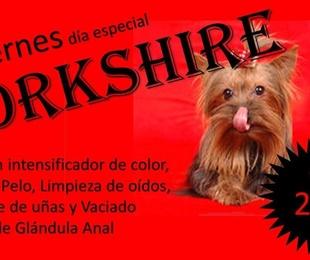 Viernes, día especial del YORKSHIRE en Mascotes Castellbell