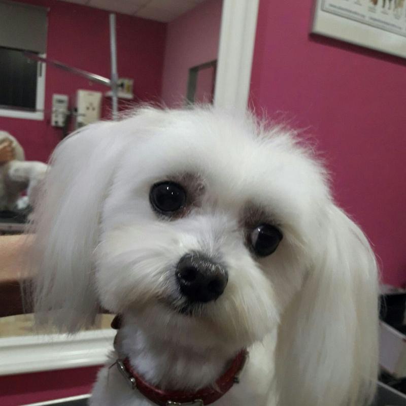 Peluquera canina especialistas en razas pequeñas