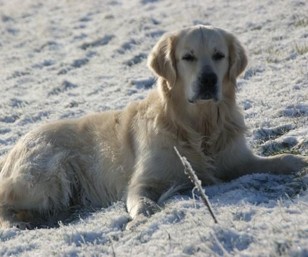 Cuidados especiales para una mascota durante el invierno