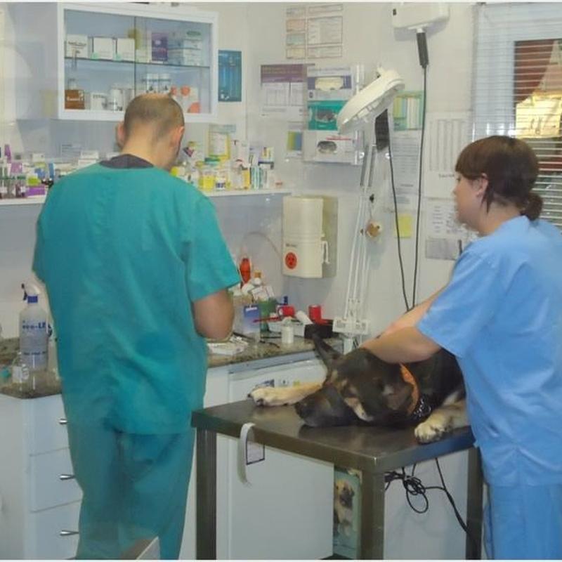 Ecografías: Servicios de Clínica principal Veterinaria Puerto Mazarrón