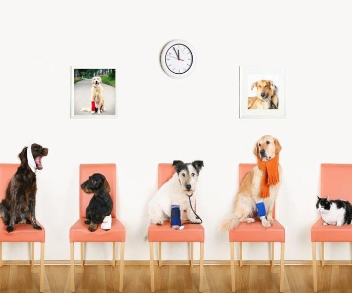 Consejos y Productos veterinarios: Servicios de Farmacia Salado Luque