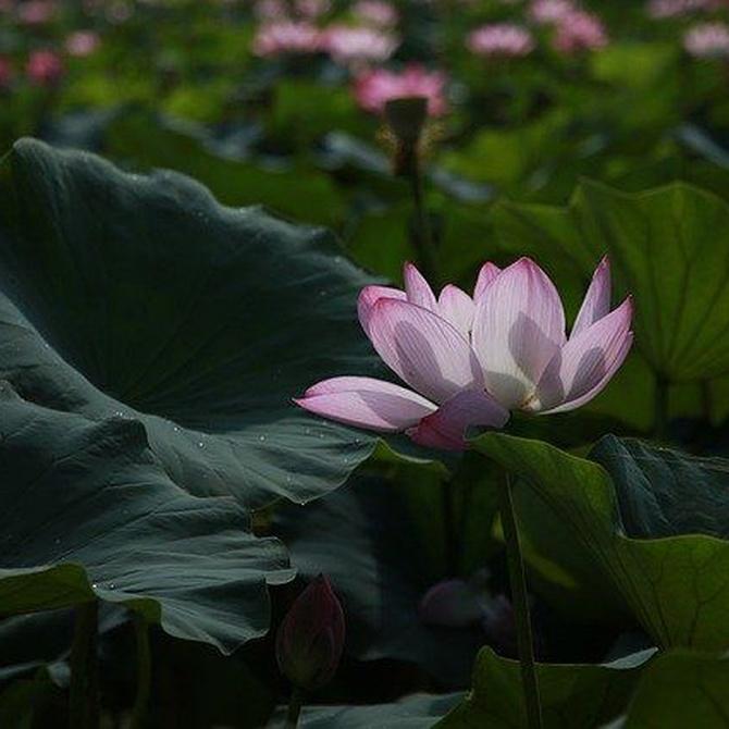 El jardín zen, mucho más que una opción estética