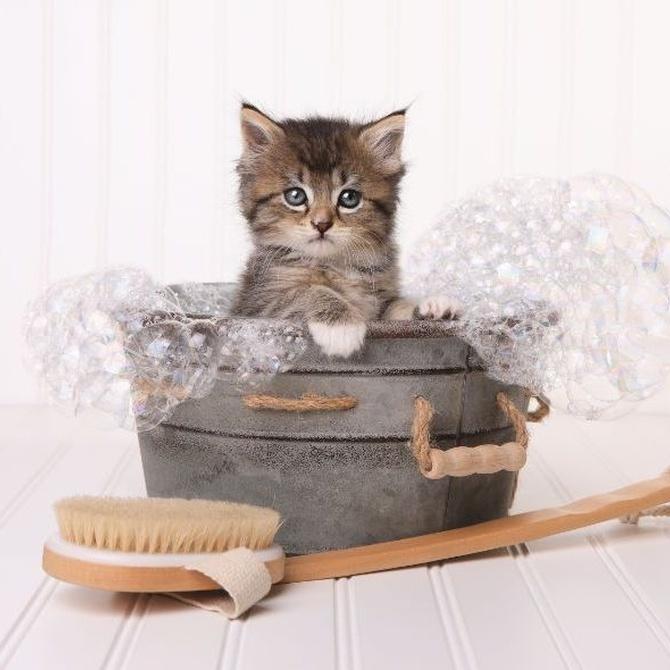 La higiene y las bolas de pelo de los gatos