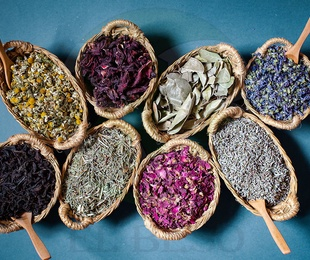 Plantas Medicinales Q