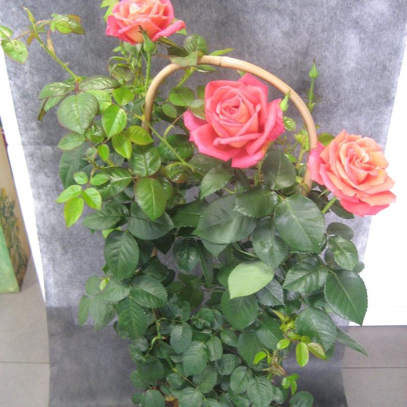 Rosal Rosa: Nuestras flores de Bouquet Flores y Plantas