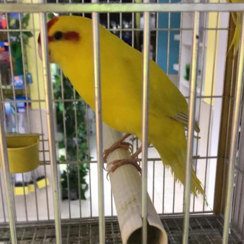 Aves: Servicios de Mascotas Dreams
