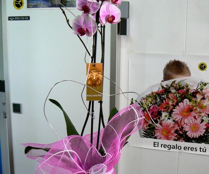 Orquidea preparada: CATÁLOGO de Flores Iglesias