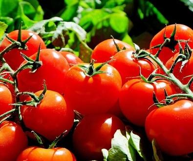 Preparando el huerto para que crezcan los tomates