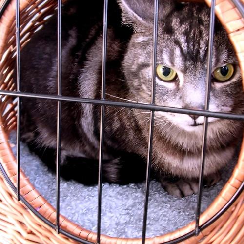 Consulta veterinaria Sabadell