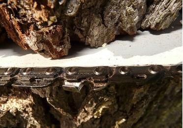 Tala de madera en pié
