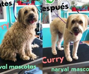 Narval Mascotas Peluquería Canina |Curry |Leganés