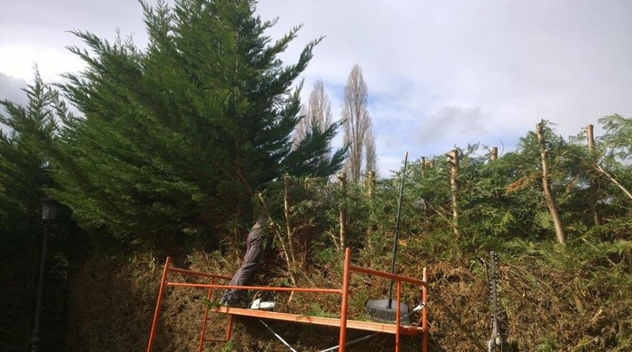 Mantenimiento de jardines, podas, talas...