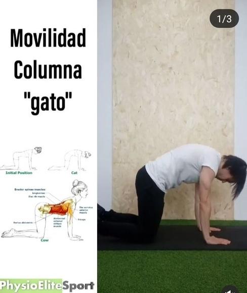 Movilidad columna - Gato PhysioEliteSport Bilbao