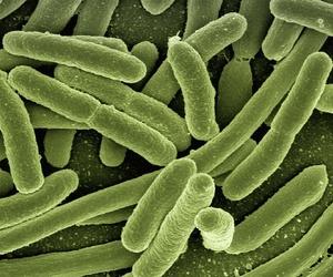 Reseñas de artículos sobre enfermedades autoinmunes y sistema inmunitario (AA.VV)