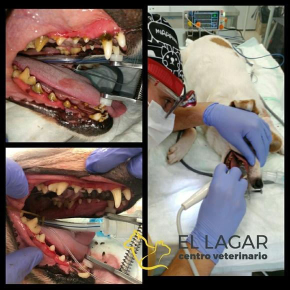 Especialidades clínicas: Tratamientos y especilidades de Veterinario El Lagar