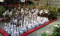 Viveros de jardinería en Málaga Semilleros La Palma donde los precios son inmejorables