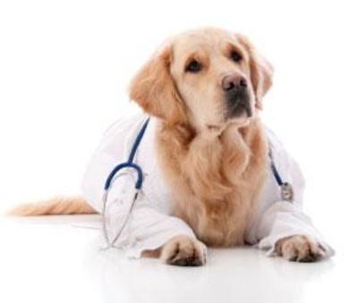Todos los productos y servicios de Peluquerías caninas: Clínica Veterinaria Jacinto Benavente