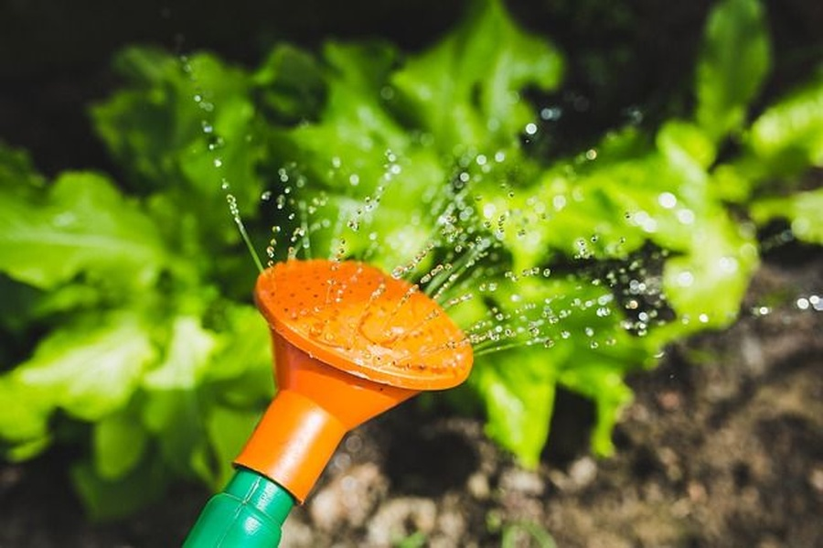 Ahorra agua en tu riego